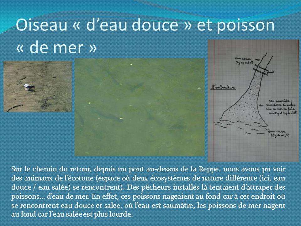 Oiseau « d'eau douce » et poisson « de mer »