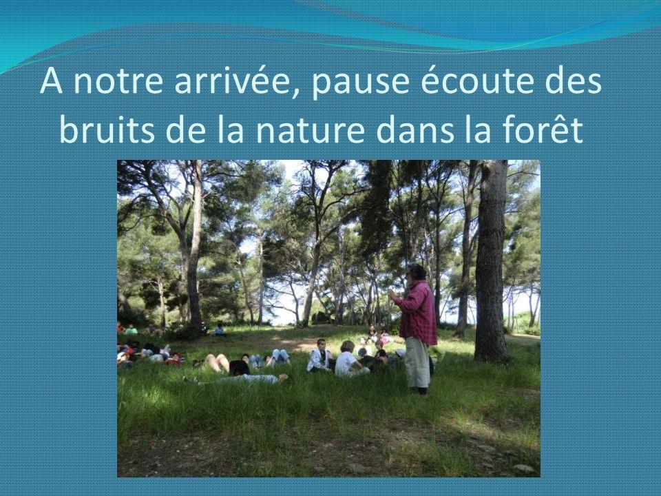 A notre arrivée, pause écoute des bruits de la nature dans la forêt