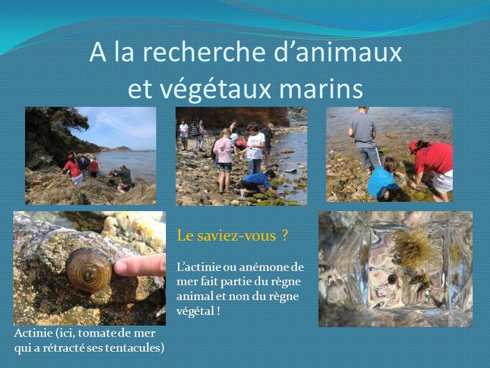 A la recherche d'animaux et végétaux marins