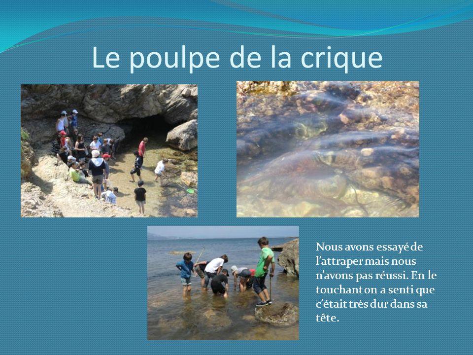 Le poulpe de la crique Nous avons essayé de l'attraper mais nous n'avons pas réussi.