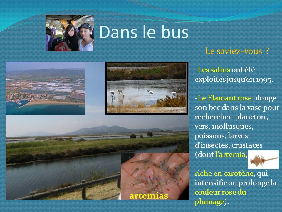 Dans le bus Le saviez-vous artemias
