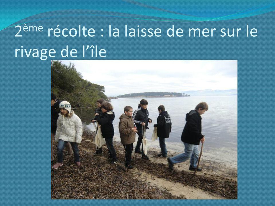 2ème récolte : la laisse de mer sur le rivage de l'île