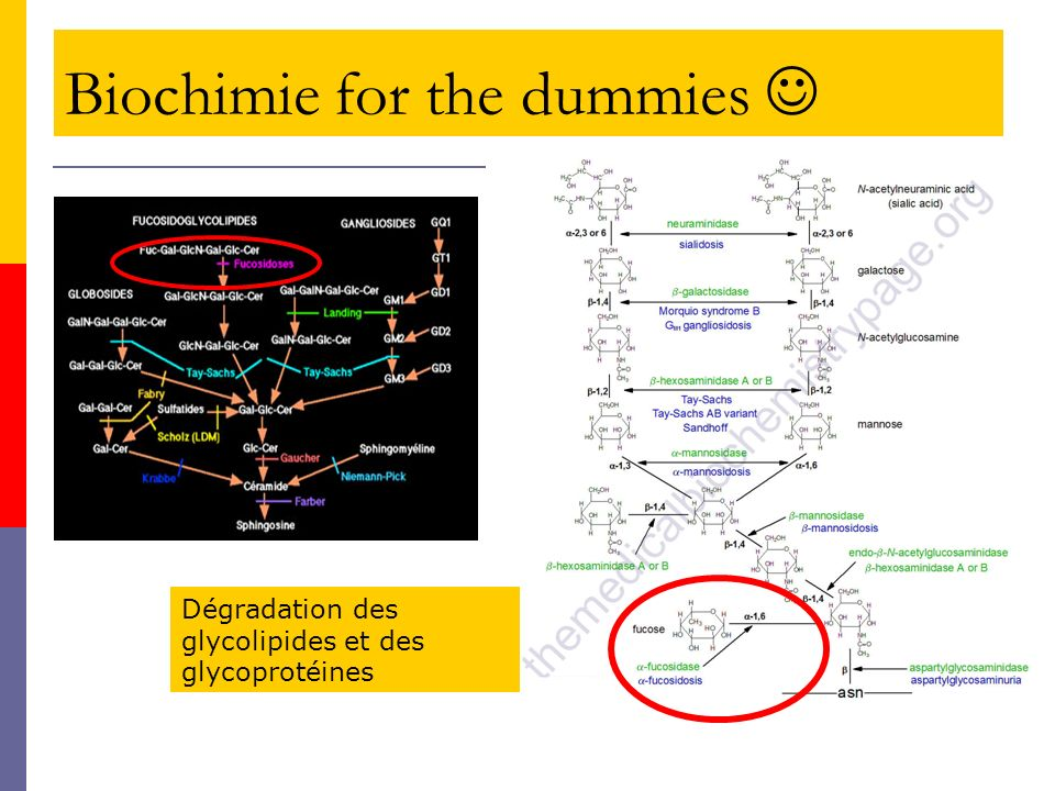 Biochimie for the dummies 