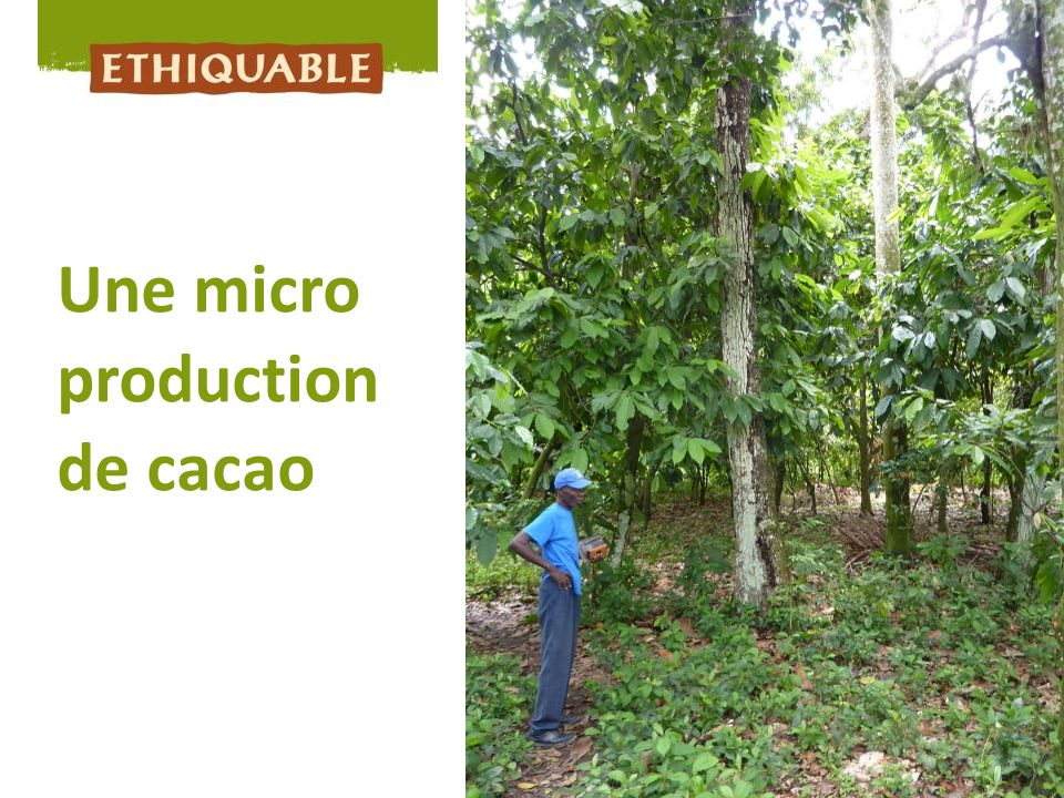 Une micro production de cacao 15