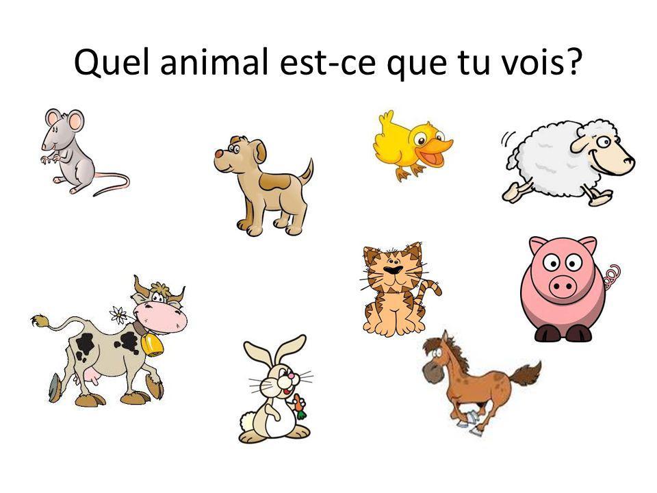 Quel animal est-ce que tu vois
