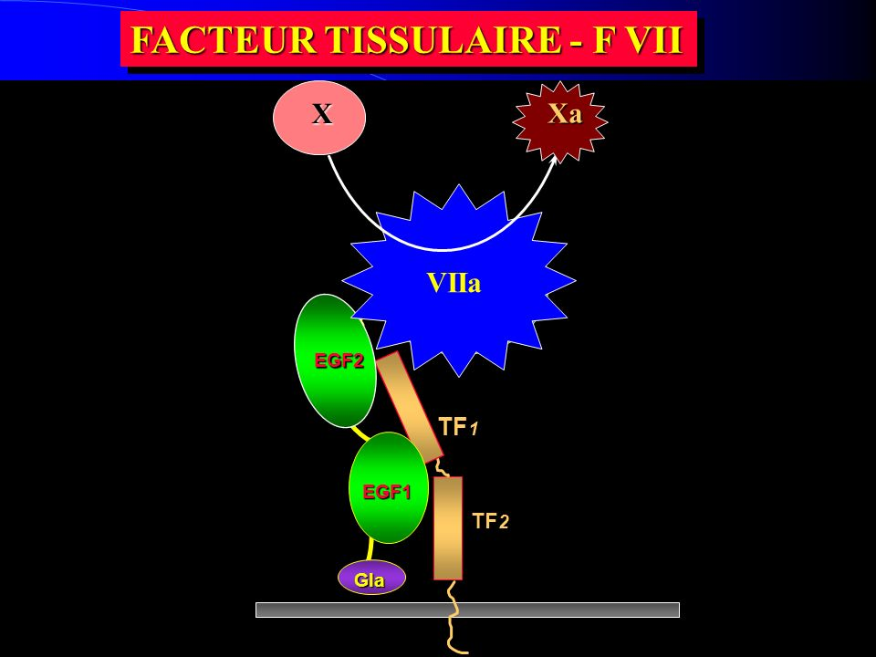 FACTEUR TISSULAIRE - F VII