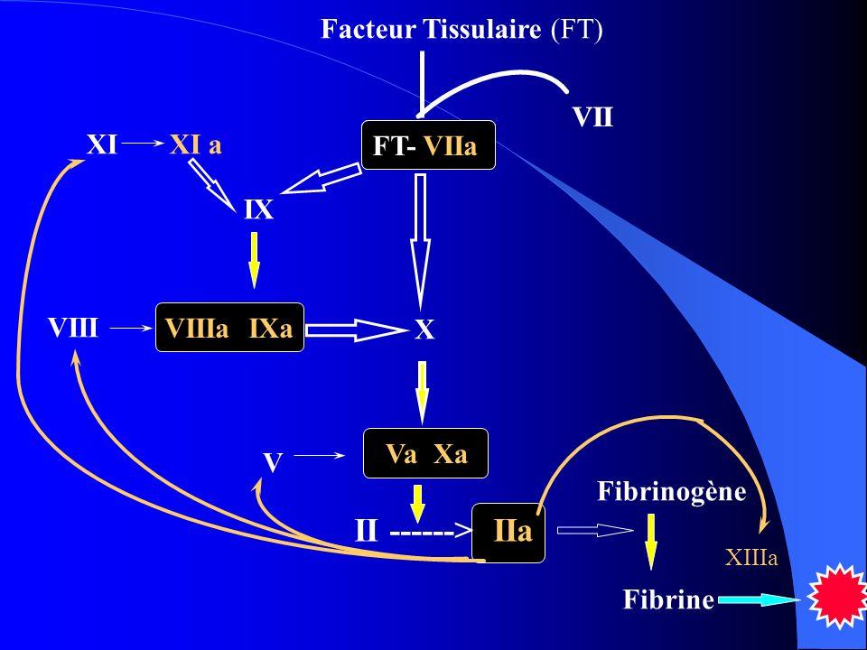 II ------> IIa Facteur Tissulaire (FT) VII FT- VIIa VII FT- VIIa X