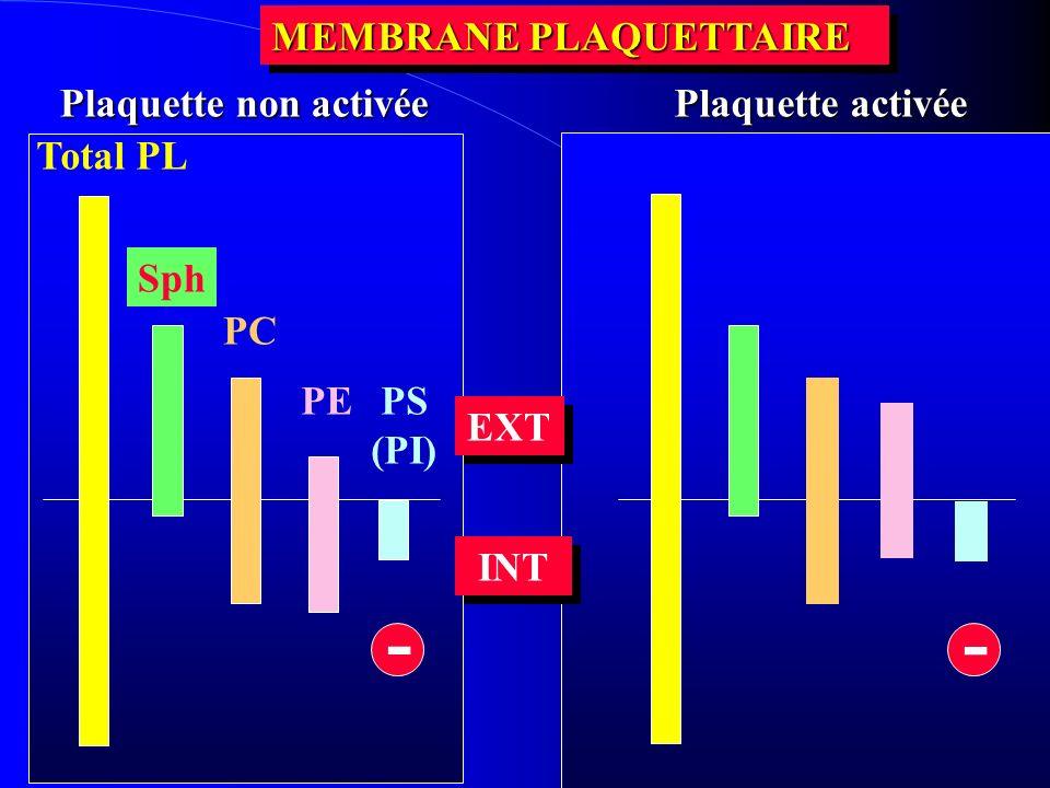 - - MEMBRANE PLAQUETTAIRE Plaquette non activée Plaquette activée