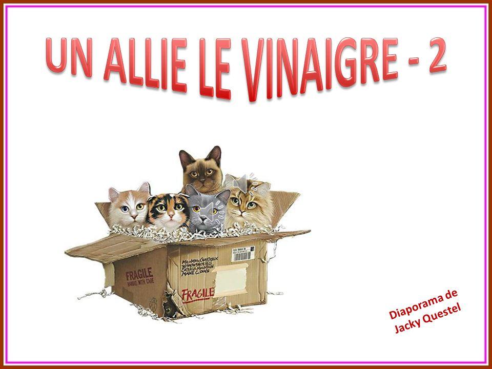 UN ALLIE LE VINAIGRE - 2 Diaporama de Jacky Questel