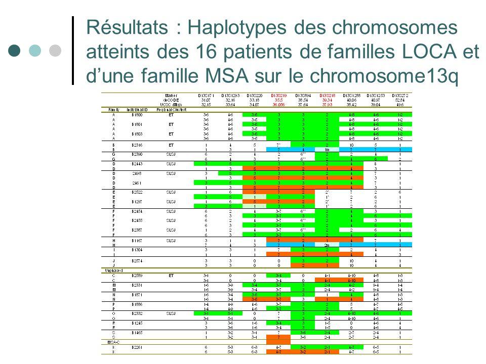 Résultats : Haplotypes des chromosomes atteints des 16 patients de familles LOCA et d'une famille MSA sur le chromosome13q