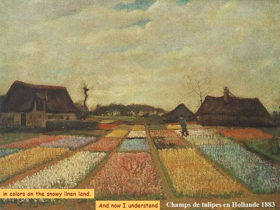 Champs de tulipes en Hollande 1883