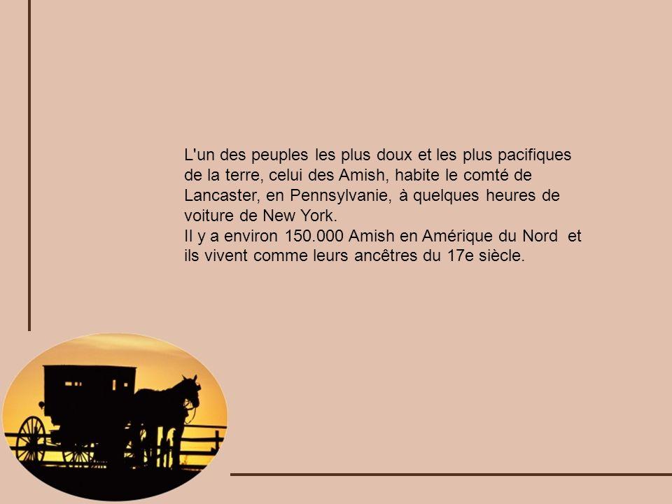 L un des peuples les plus doux et les plus pacifiques de la terre, celui des Amish, habite le comté de Lancaster, en Pennsylvanie, à quelques heures de voiture de New York.