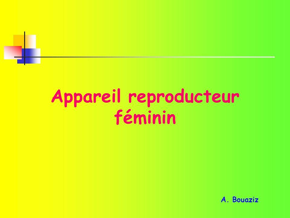 Appareil reproducteur féminin