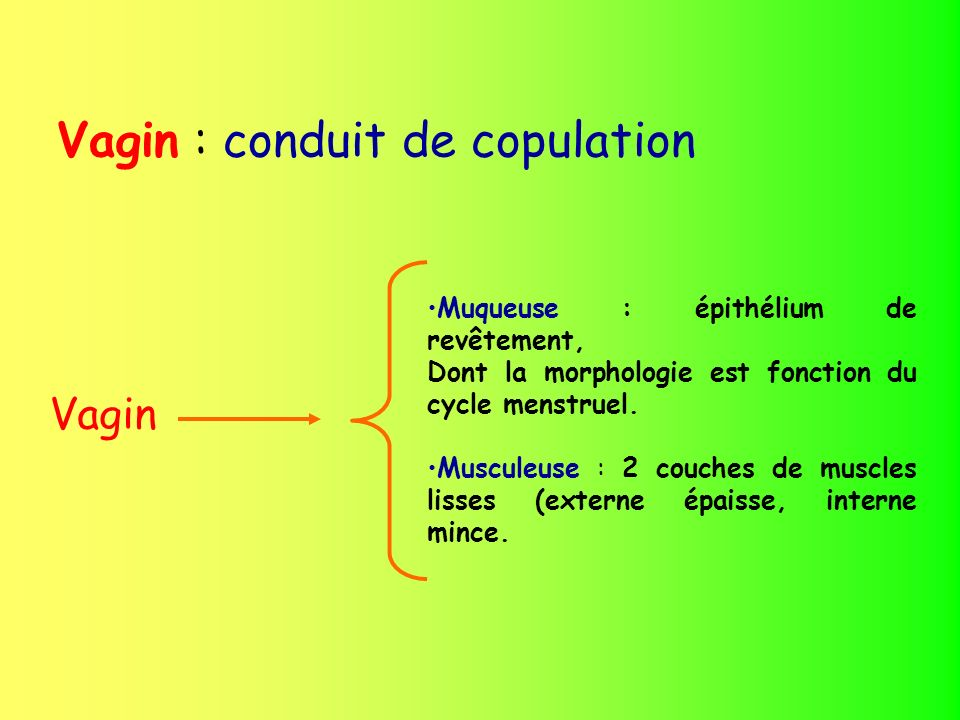 Vagin : conduit de copulation
