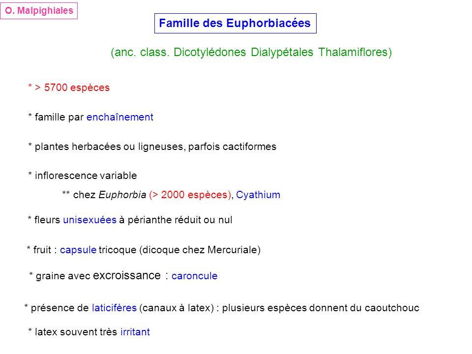 Famille des Euphorbiacées