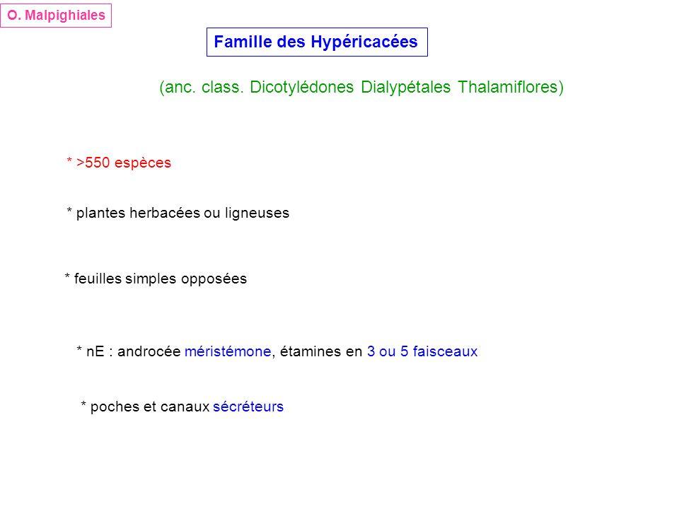 Famille des Hypéricacées