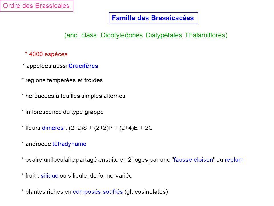 Famille des Brassicacées