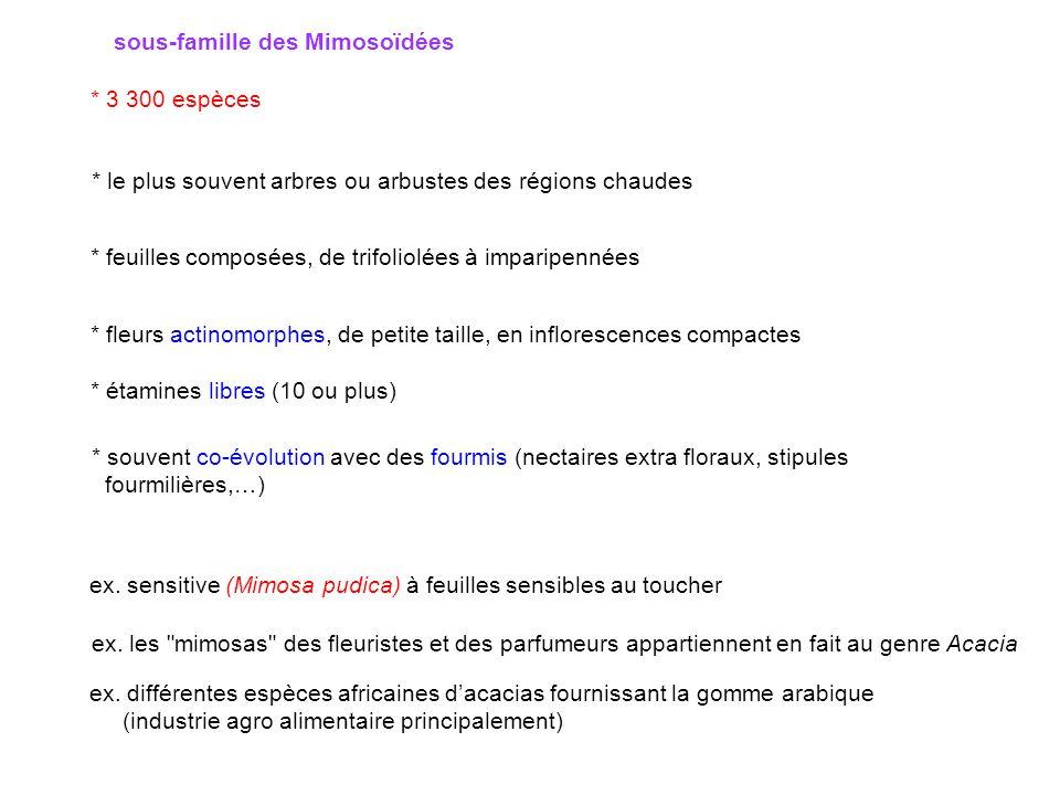sous-famille des Mimosoïdées