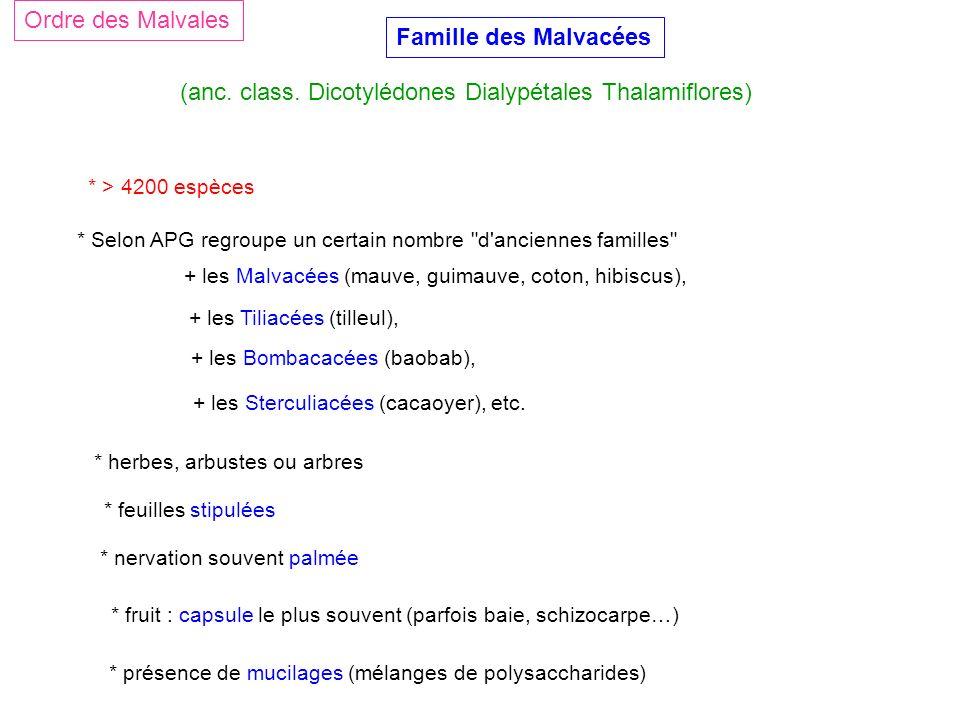 (anc. class. Dicotylédones Dialypétales Thalamiflores)