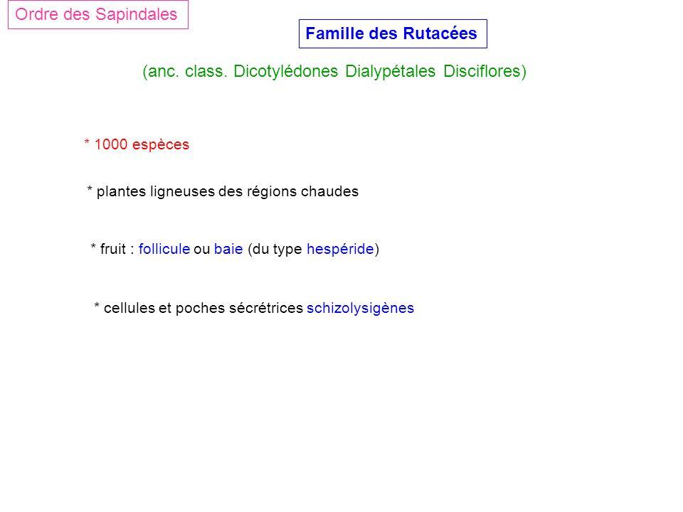 (anc. class. Dicotylédones Dialypétales Disciflores)