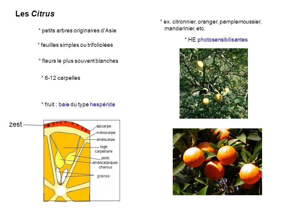 Les Citrus zest * ex. citronnier, oranger, pamplemoussier,