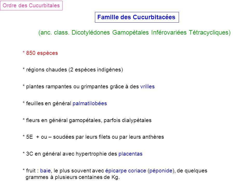 Famille des Cucurbitacées