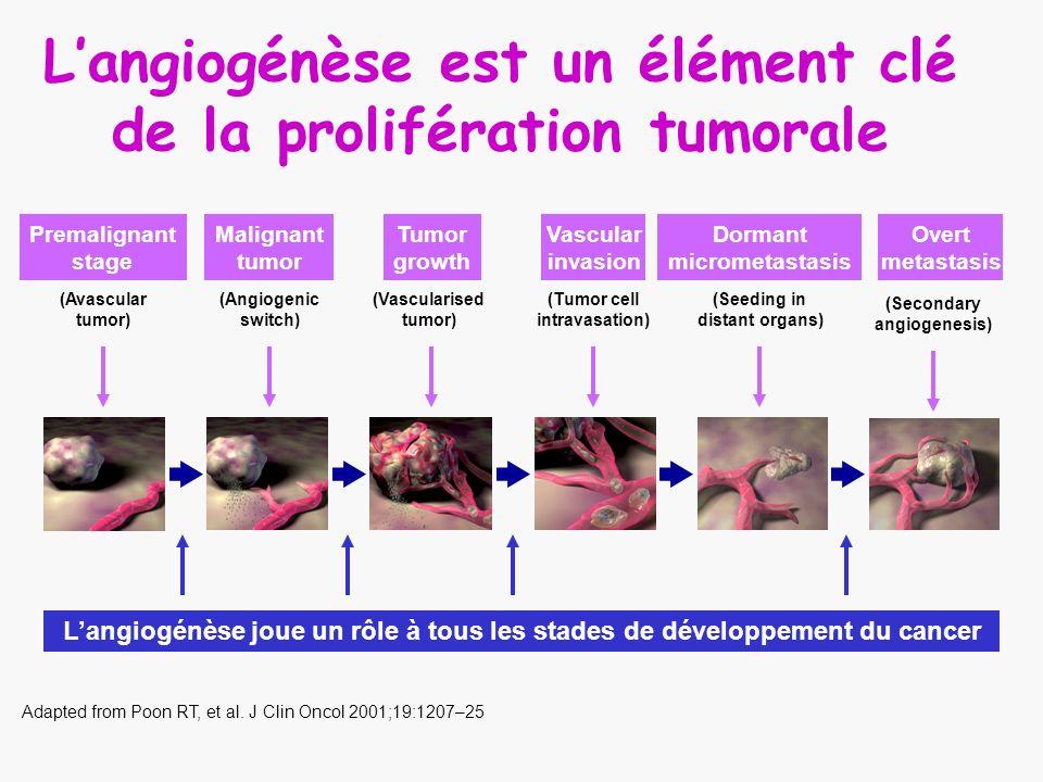 L'angiogénèse est un élément clé de la prolifération tumorale