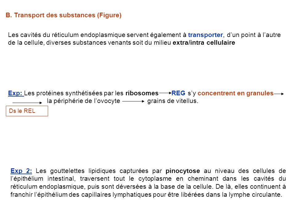 B. Transport des substances (Figure)