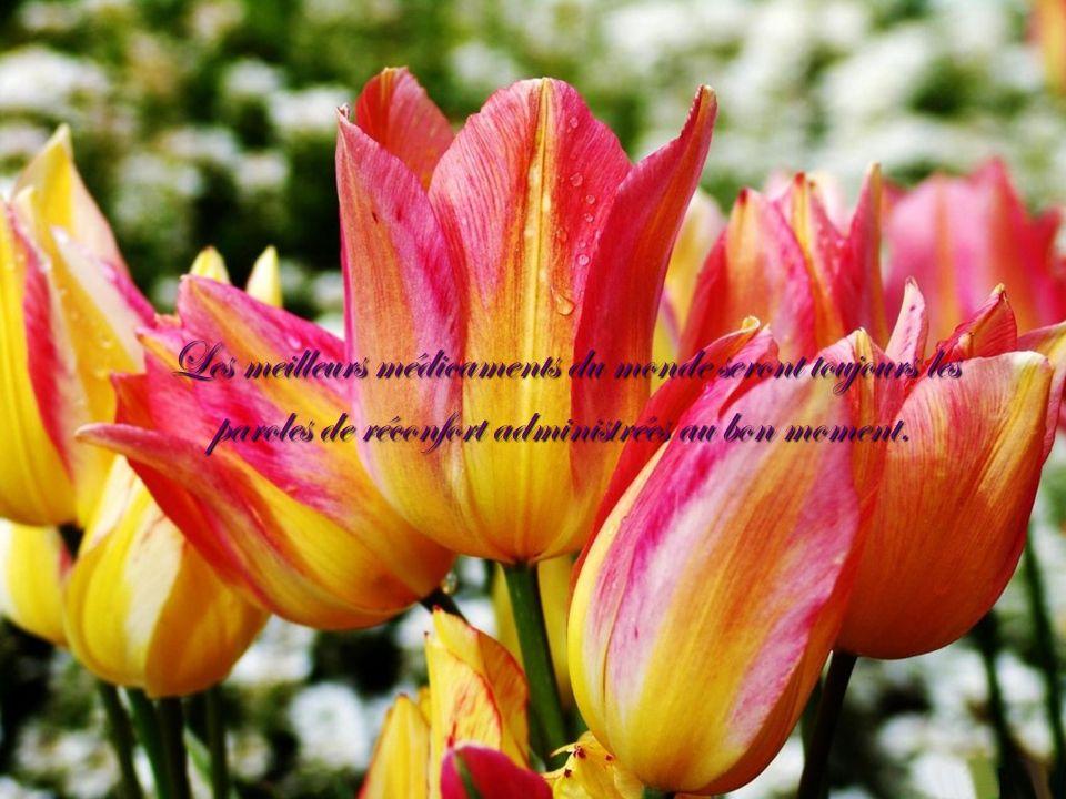 Les meilleurs médicaments du monde seront toujours les paroles de réconfort administrées au bon moment.