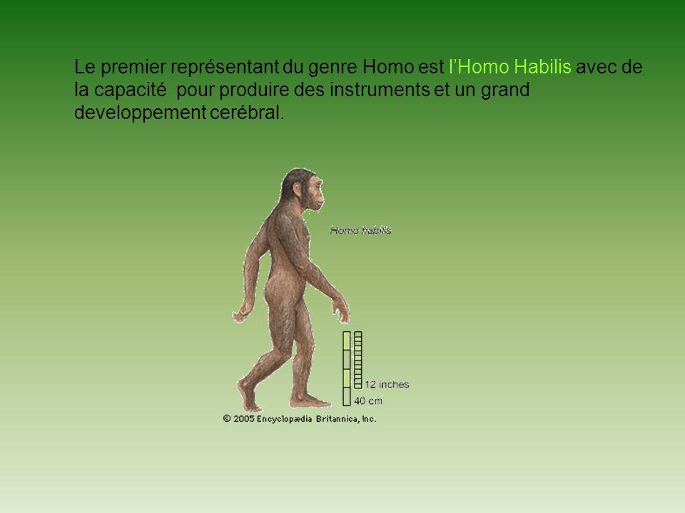 Le premier représentant du genre Homo est l'Homo Habilis avec de la capacité pour produire des instruments et un grand developpement cerébral.
