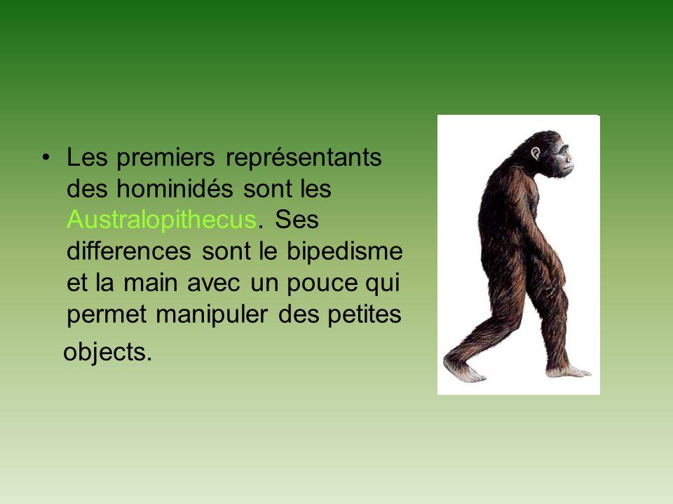 Les premiers représentants des hominidés sont les Australopithecus