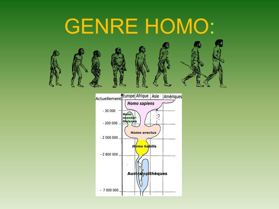 GENRE HOMO: