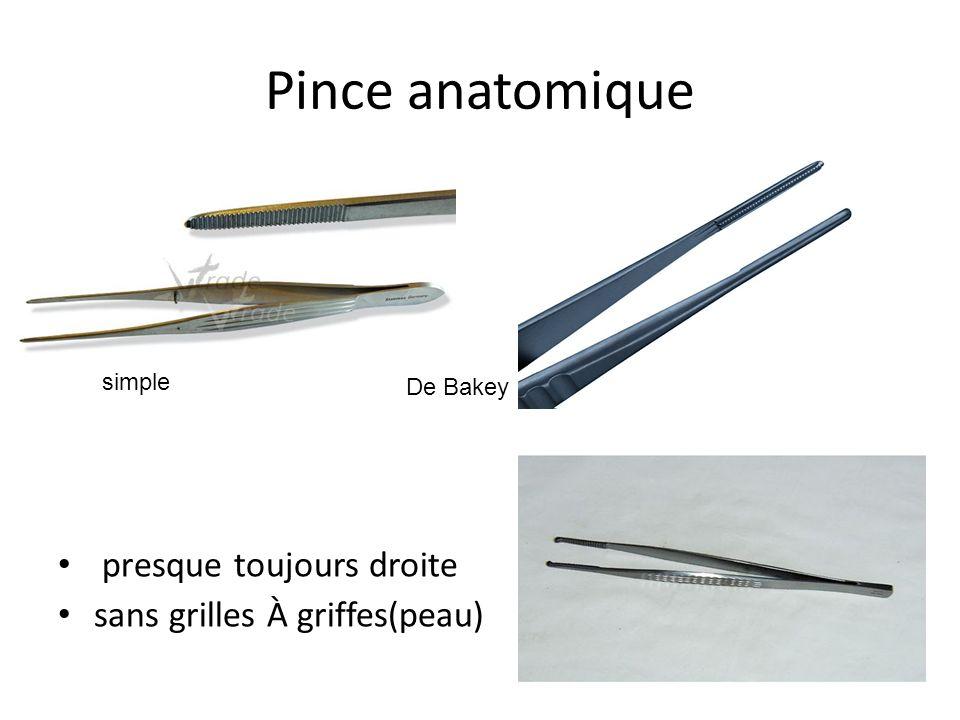 Pince anatomique presque toujours droite sans grilles À griffes(peau)