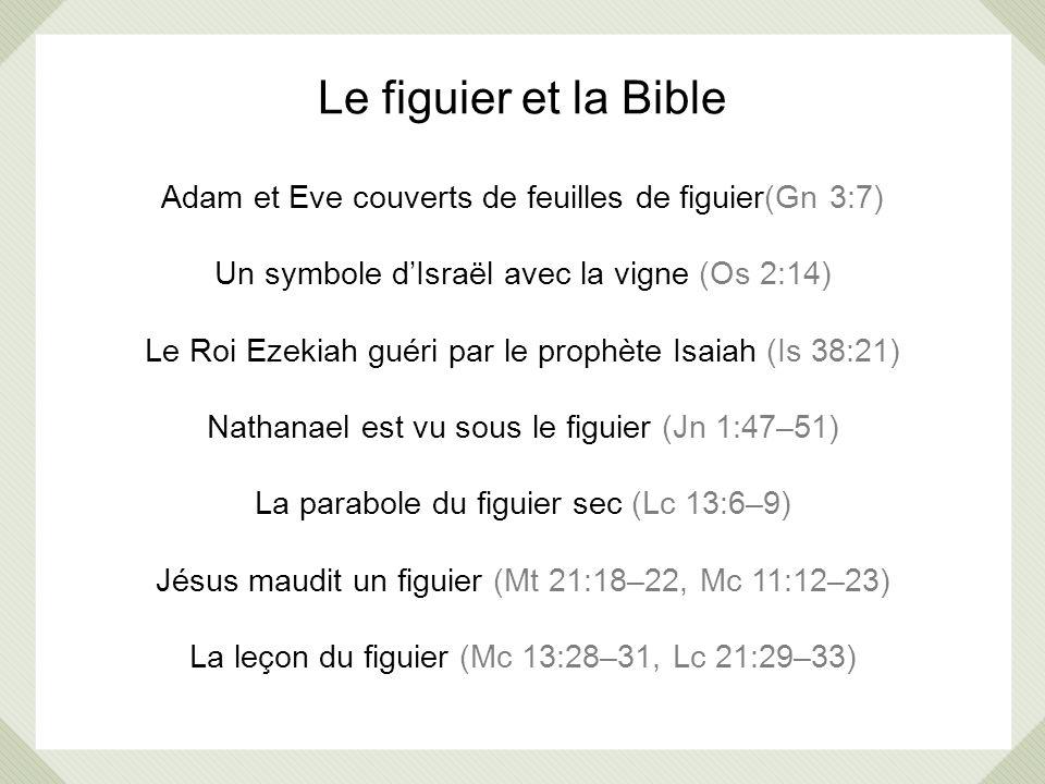 Le figuier et la Bible Adam et Eve couverts de feuilles de figuier(Gn 3:7) Un symbole d'Israël avec la vigne (Os 2:14)