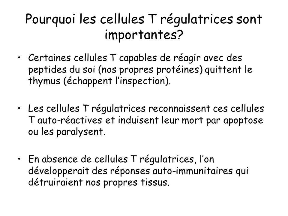 Pourquoi les cellules T régulatrices sont importantes