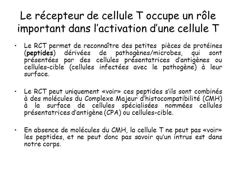 Le récepteur de cellule T occupe un rôle important dans l'activation d'une cellule T
