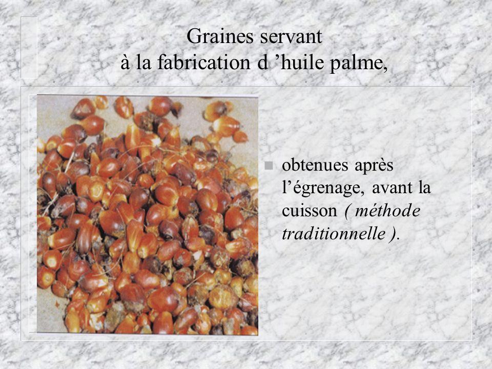 Graines servant à la fabrication d 'huile palme,