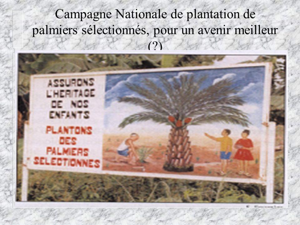 Campagne Nationale de plantation de palmiers sélectionnés, pour un avenir meilleur ( )
