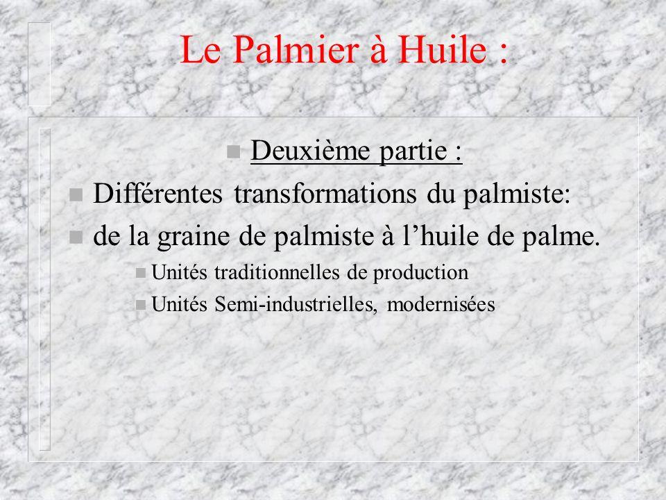 Le Palmier à Huile : Deuxième partie :