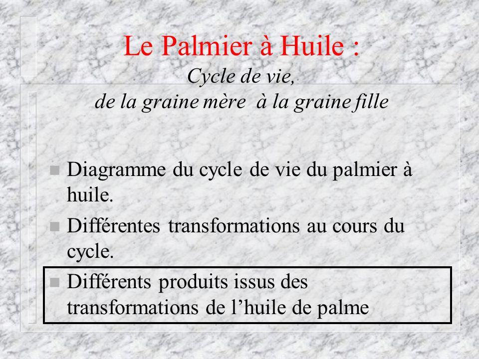 Le Palmier à Huile : Cycle de vie, de la graine mère à la graine fille