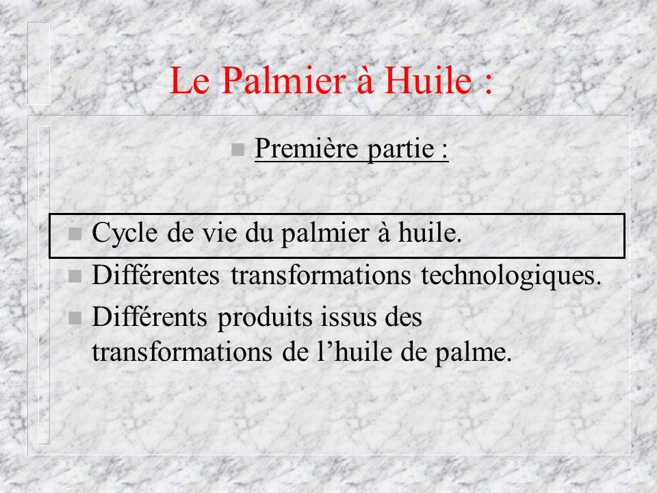 Le Palmier à Huile : Première partie :