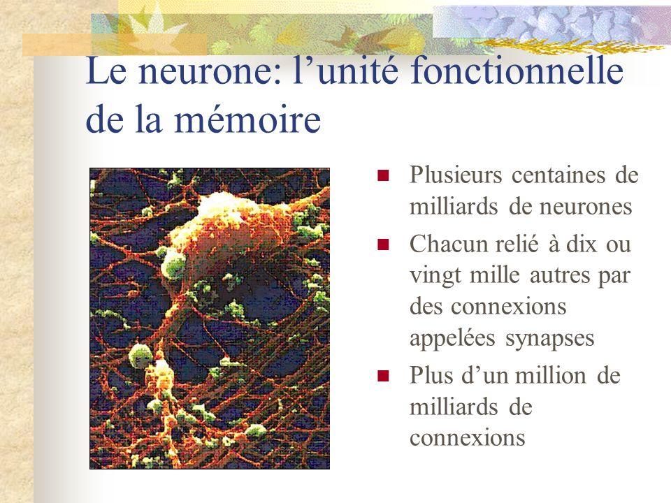 Le neurone: l'unité fonctionnelle de la mémoire