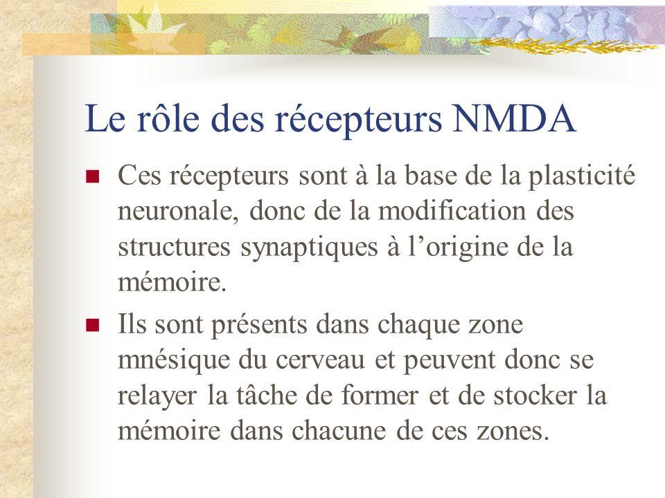 Le rôle des récepteurs NMDA