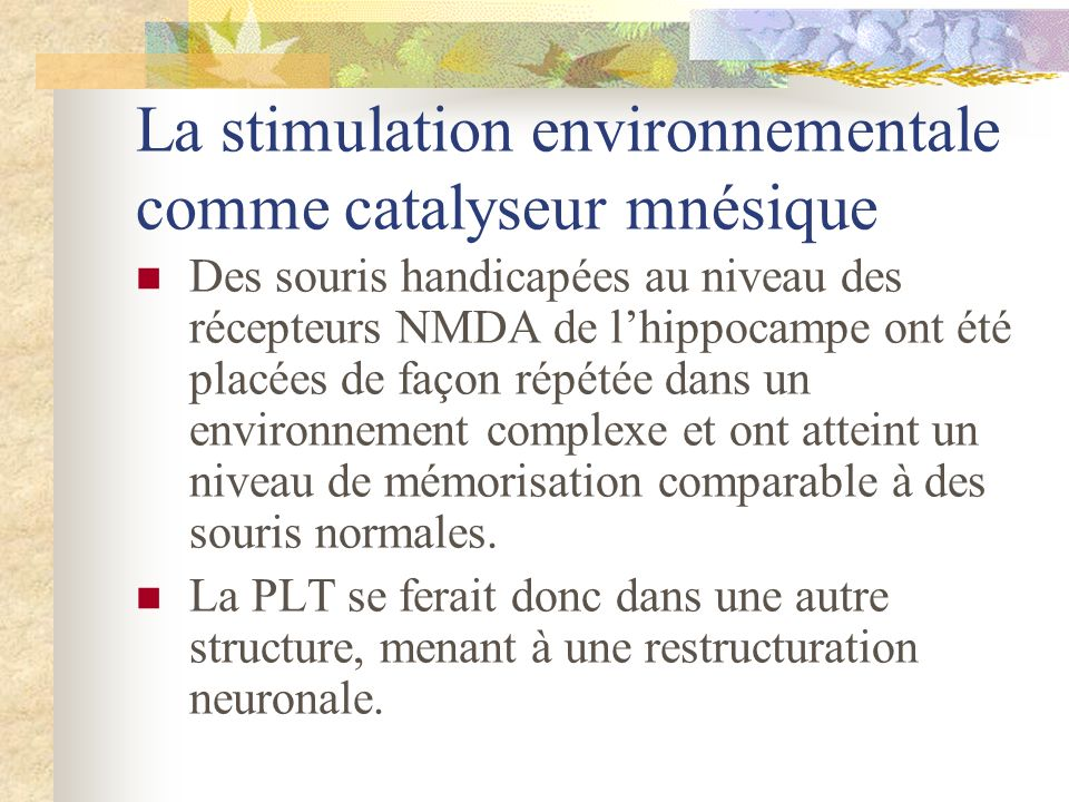La stimulation environnementale comme catalyseur mnésique