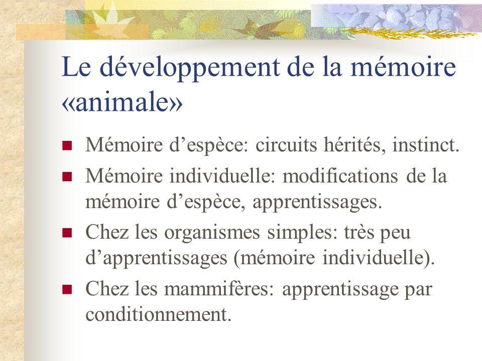 Le développement de la mémoire «animale»