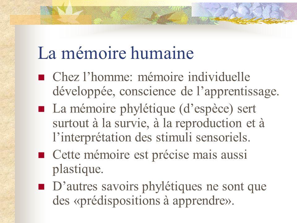 La mémoire humaine Chez l'homme: mémoire individuelle développée, conscience de l'apprentissage.