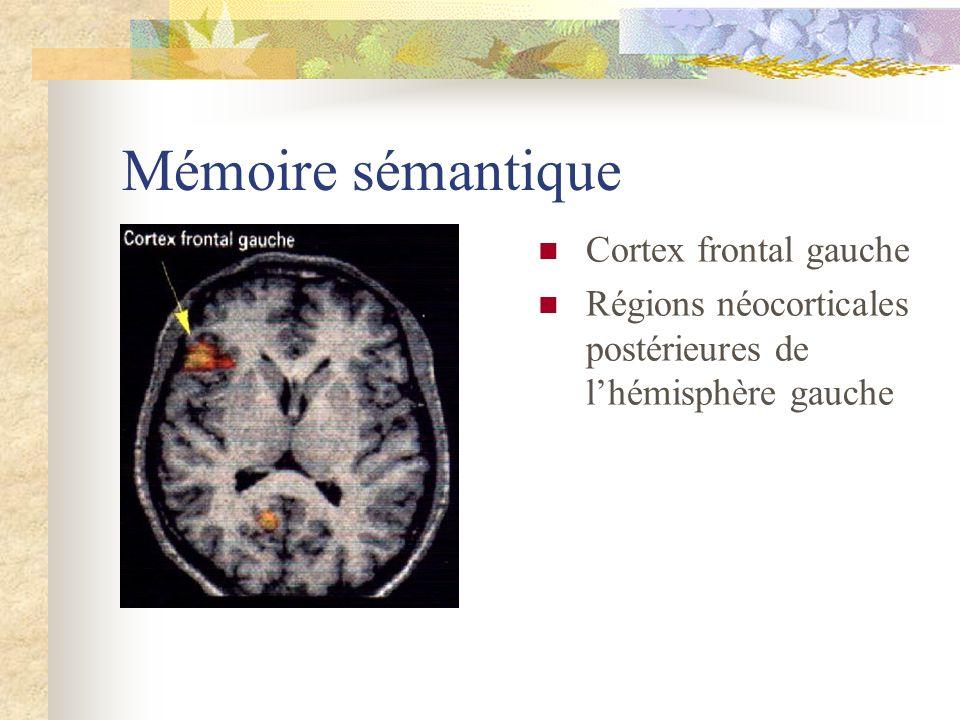 Mémoire sémantique Cortex frontal gauche
