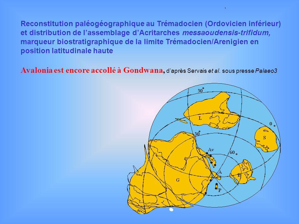 Reconstitution paléogéographique au Trémadocien (Ordovicien inférieur) et distribution de l'assemblage d'Acritarches messaoudensis-trifidum, marqueur biostratigraphique de la limite Trémadocien/Arenigien en position latitudinale haute