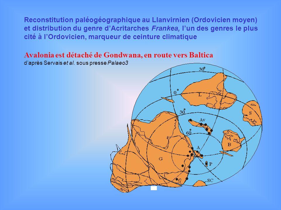 Avalonia est détaché de Gondwana, en route vers Baltica