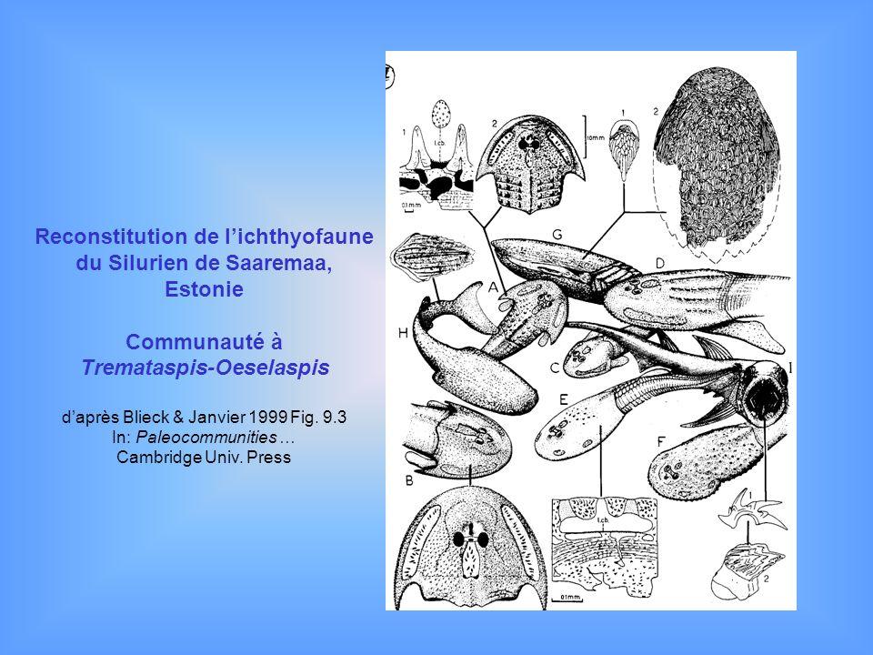 Reconstitution de l'ichthyofaune du Silurien de Saaremaa, Estonie